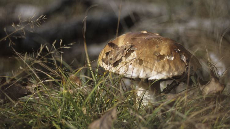 Le spécimen découvert devait finir en omelette, selon celui qui l'a chassé. (AFP)