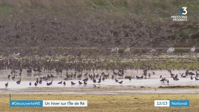 #DecouverteWE : l'île de Ré, un lieu de rêve pour les oiseaux