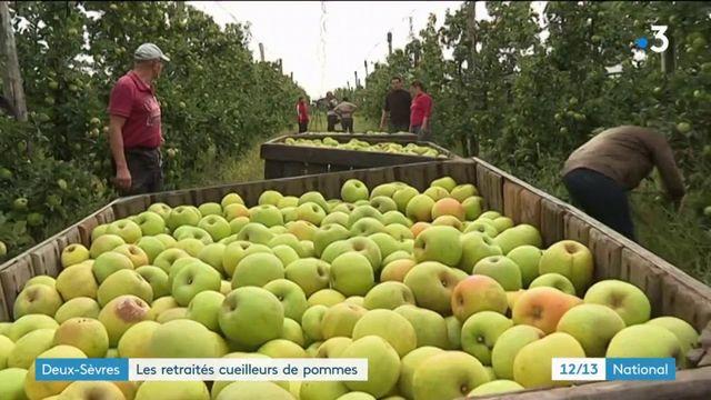 Deux-Sèvres : les seniors assurent la cueillette des pommes