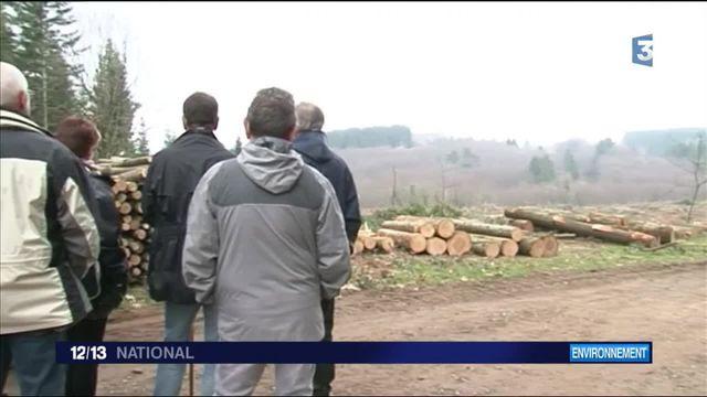 Limousin : à la découverte de la forêt