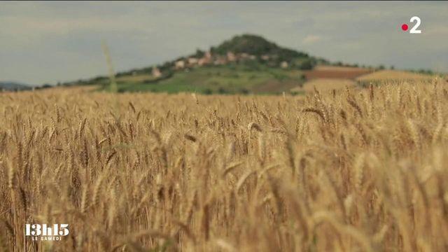 """VIDEO. """"La vérité sort du grain de blé"""" : le maître boulanger Pascal Auriat dévoile l'un des secrets de ses pains savoureux"""