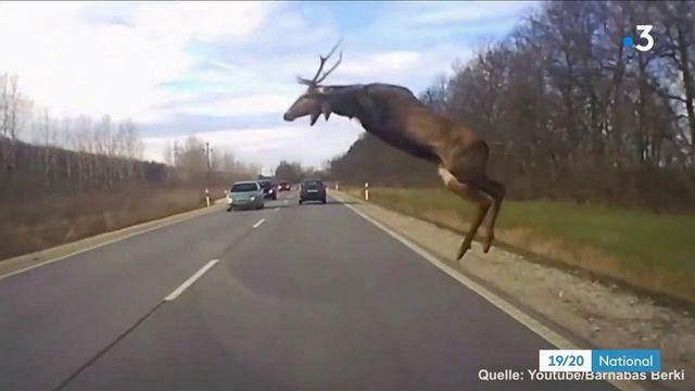 Innovation : en Allemagne, des appareils pour détecter les animaux sur les routes