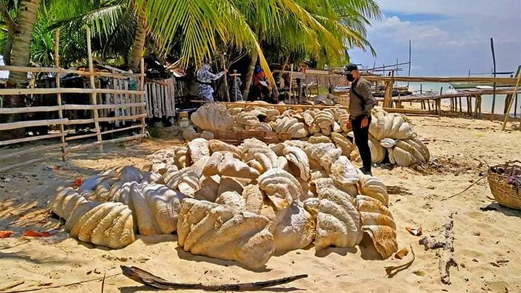Ungarde-côtes inspecte des coquilles de palourdes géantes saisies, sur une plagede la province de Palawan, aux Philippines, le 16 avril 2021. (HANDOUT / PHILIPPINE COAST GUARD (PCG) / AFP)