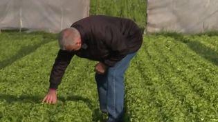 Un appel a été lancé pour venir en aide aux agriculteurs, qui manquent de bras dans leurs champs pour assurer les récoltes. Environ 182 000 personnes ont déjà postulé. Les professionnels s'interrogent : comment tout cela va-t-il se mettre en place ? Pour quel coût ? (France 2)