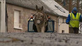 Un âne et une maraîchère ramassent les déchets (France 3)