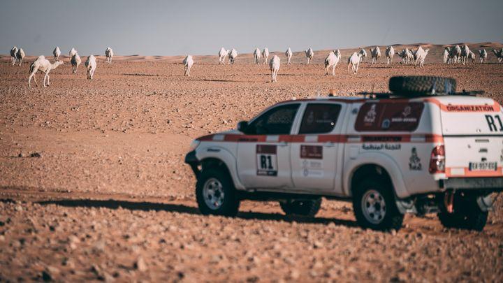 Des dromadaires croisés par les organisateurs du Dakar 2021