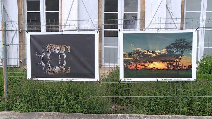 """La série """"Clin d'oeil africain"""" propose le regard de 27 photographes sur le continent (France 3 Nouvelle Aquitaine)"""