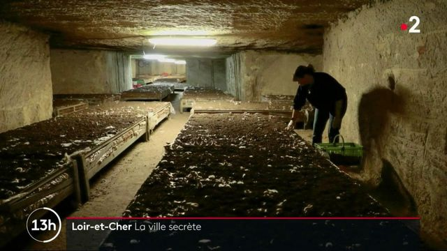 Loir-et-Cher : une plongée enchantée dans les champignonnières de Bourré