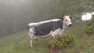 Sur le massif des Vosges, on défend la pratique agricole ancestrale de la transhumance. Les éleveurs alsaciens aimeraient bien la voir inscrite au patrimoine culturel immatériel de l'Unesco. (FRANCE 3)