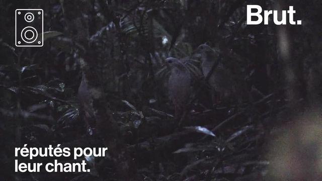 Cet écrin de nature préservée en Nouvelle-Calédonie cache en son cœur un oiseau emblématique : le cagou. C'est le Parc Provincial de la Rivière Bleue.