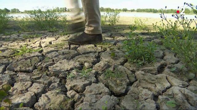 Ain : des étangs en alerte de sécheresse