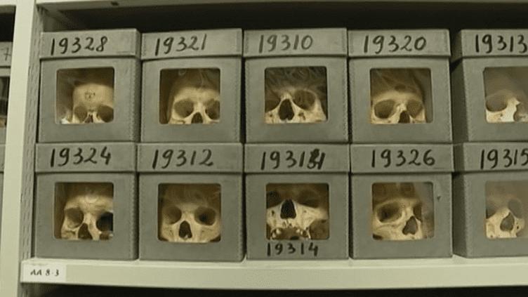 18 000 crânes sont conservés à des fins scientifiques au Musée de l'Homme à Paris.  (France 3 / Culturebox)
