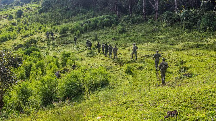 Des éco-gardes patrouillent dans le parc national des Virunga. Ils sont souvent la cible d'attaques des groupes armés. (AFP/ VIRUNGA NATIONAL PARK)