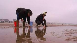 La pêche à pied est de retour pour la première grande marée de l'année sur la plage de la Baule, ce jeudi 22 janvier. (CAPTURE D'ÉCRAN FRANCE 3)