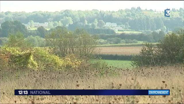Découverte : la pierre bleue du parc naturel de l'Avesnois