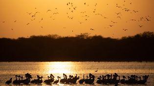 Le parc national Dinder au Soudan, le 6 avril 2021 (ABDULMONAM EASSA / AFP)