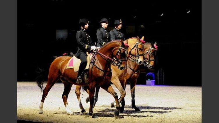 Les chevaux du Cadre noir de Saumur à Liévin (novembre 2010)  (PhotoPQR / Voix du Nord / MAXPPP / Delphine Pineau)