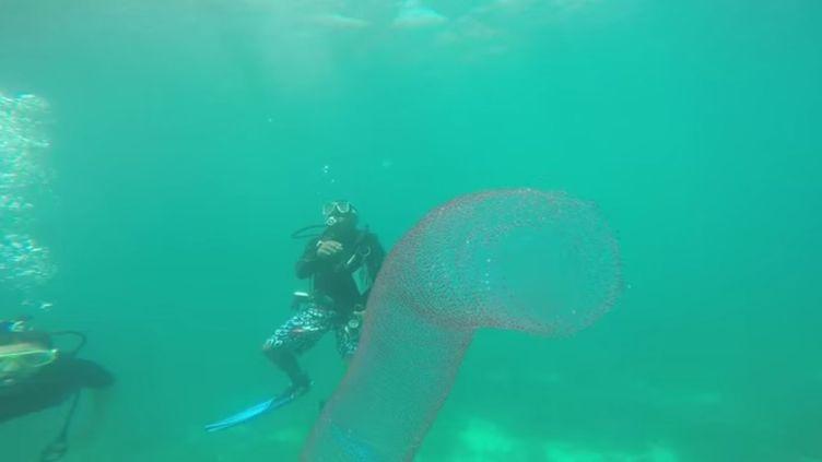 """Capture d'écran d'une vidéo de Ryan Carpenter filmant un pyrosome, aussi appelé """"licorne des mers"""", au large des Philippines. (RYAN CARPENTER / YOUTUBE)"""