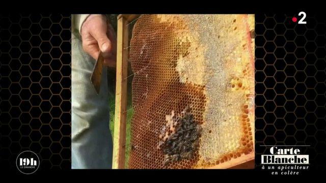 """VIDEO. """"Tout est contaminé par ces merdes-là !"""" : le cri de colère d'un apiculteur du Finistère"""