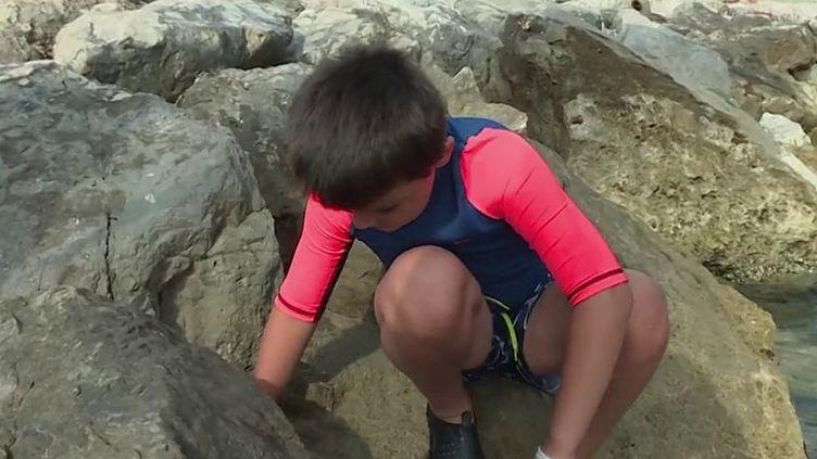 Environnement : ces bénévoles qui nettoient les plages de Méditerranée (France 3)