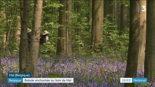 Belgique : balade enchantée au bois de Hal
