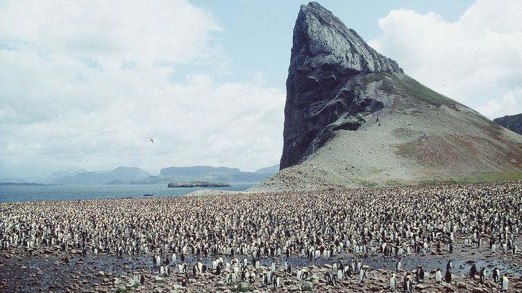 Une colonie de manchots sur les îles Kerguelen. (GLOBAL BOOK PUBLISHING / THE ART ARCHIVE / AFP)