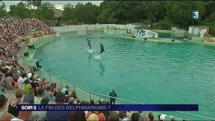 Lesdauphins sont protégés par le nouvel arrêté. (FRANCE 3)