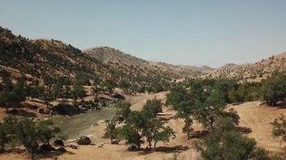 États-Unis : la Californie sévèrement frappée par la sécheresse (France 2)