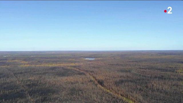 Sibérie : de lourdes conséquences suite aux incendies géants