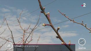 Les bourgeons des arbres fruitiers apparaissent déjà dans le Jura début mars 2021 (France 2)
