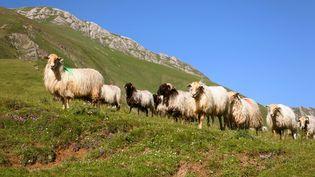 Des brebis dans la vallée d'Ossau (Pyrénées-Atlantiques), le 27 avril 2018.  (DABADIE-ANA / ONLY FRANCE / AFP)