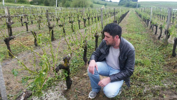Cyril Giresse dans ses vignes à Samonac, près de Bourg sur Gironde, le 26 mai 2018. (PIERRE-MARIE GROS / RADIOFRANCE)