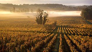 Un vignole AOC de l'appellation saint-émilion, à Arvouet, sur la commune de Vignonet (Gironde), en automne. (PHILIPPE ROY / PHILIPPE ROY / AFP)
