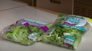Les salades en sachet représentent aujourd'hui un quart du secteur. Mais comment sont-elles conditionnées ? France 2 s'est rendue dans un entrepôt qui les conditionne.  (CAPTURE ECRAN FRANCE 2)