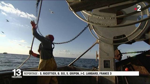 Baie de Somme : 80% de poissons en moins