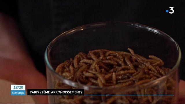 Alimentation : les vers de farine officiellement autorisés par l'Union européenne