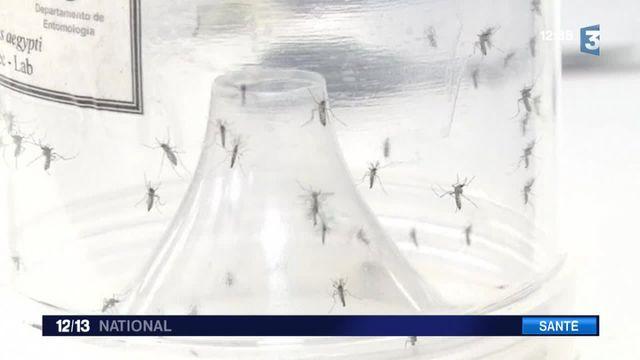 Virus Zika : l'OMS lance l'alerte pour une urgence mondiale