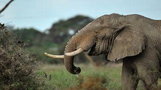 Chaque année, 25000 éléphants sont abattus. (TONY KARUMBA / AFP)