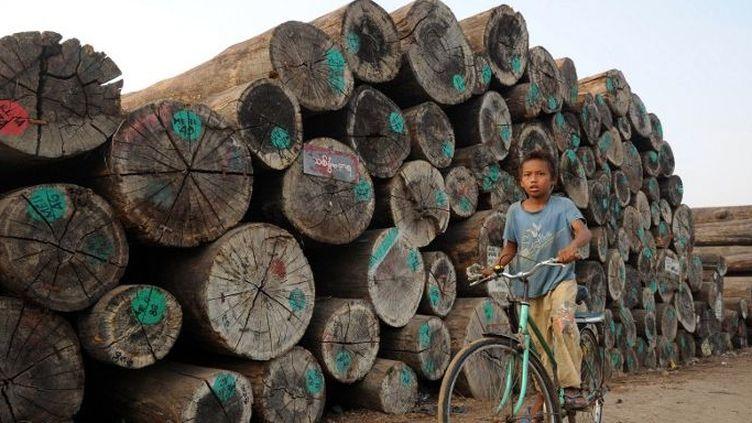 La forêt birmane perd chaque année l'équivalent de la superficie de la Belgique. (Soe Than WIN / AFP)