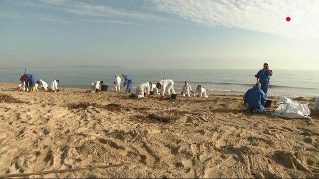 Var : le pétrole envahit les plages