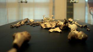 """Les fossiles de """"Lucy"""" au musée nationale d'Addis-Abeba en Ethiopie, le 7 mai 2013. (JENNY VAUGHAN / AFP)"""
