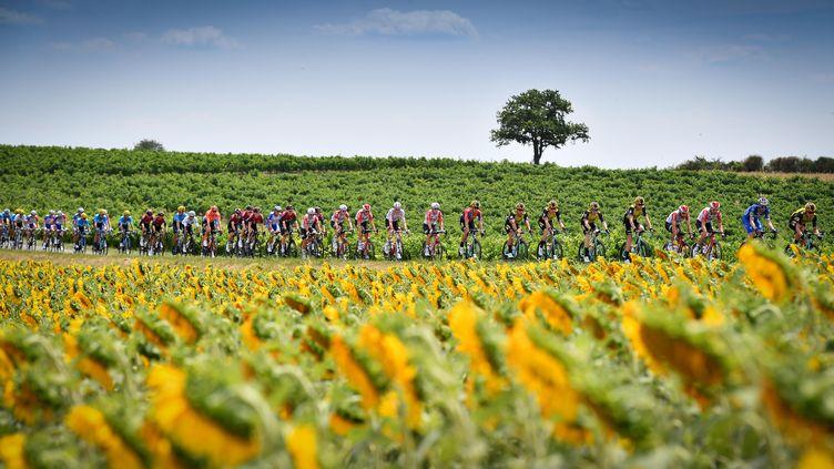 L'édition 2019 du Tour en France, entre Albi et Toulouse, le 17 juillet.    (DAVID STOCKMAN / BELGA MAG)