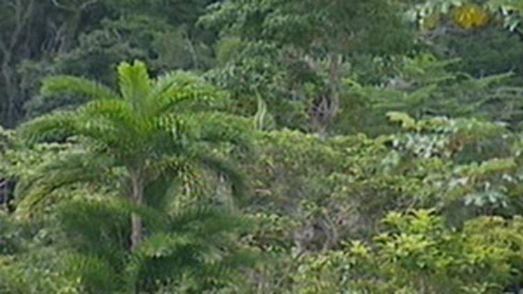 La forêt amazonienne, au coeur du Forum social mondial de Belem (janvier 2009) (F2)