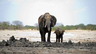 """La brigade """"Akashinga"""", composée uniquement de femmes, contribuent à protéger les éléphants du braconnage. (MARTIN BUREAU / AFP)"""