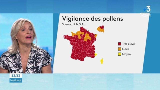 Allergies au pollen : la France en zone rouge