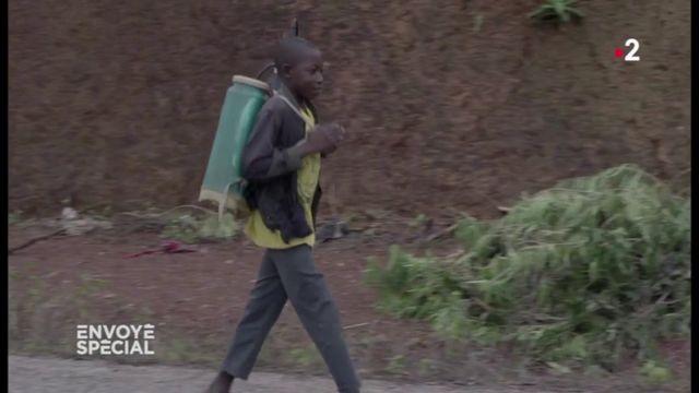 VIDEO. Dans les plantations clandestines de cacao en Côte d'Ivoire, des enfants manipulent du glyphosate sans protection