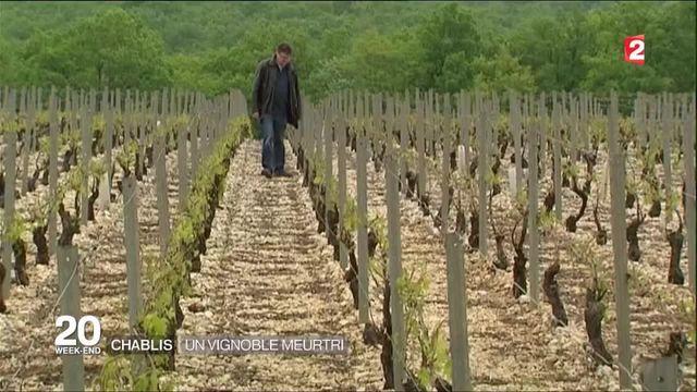 Bourgogne : la grêle ravage les vignes du Chablis