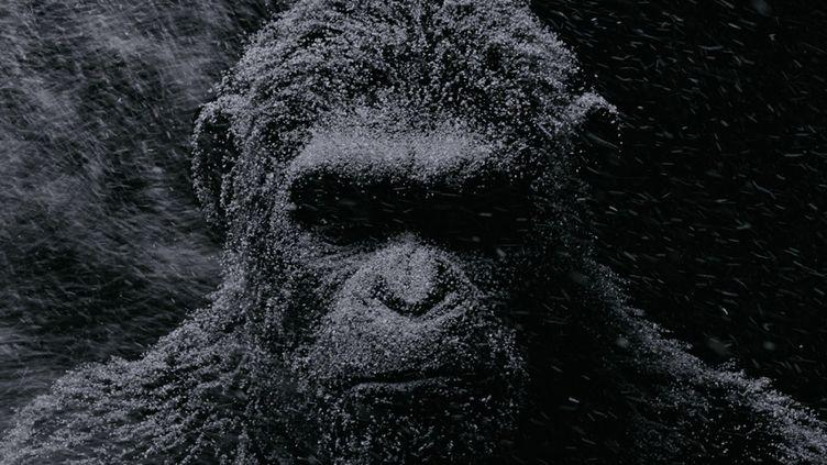"""Andy Serkis sous la défroque du singe César dans """"La Planète des singes : suprématie"""" de Matt Reeves  (Twentieth Century Fox France)"""