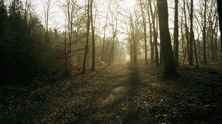 Vue de la forêt de Fontainebleau (Seine-et-Marne). (A.J. CASSAIGNE / PHOTONONSTOP / AFP)