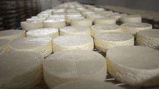 Des camemberts en court d'affinage à la coopérative d'Isigny-sur-Mer (Calvados), le 4 avril 2014. (CHARLY TRIBALLEAU / AFP)